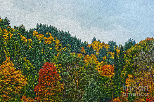 Fall Trees by Nur Roy