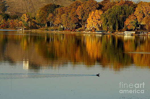 Fall Trees Refections by Tina Hailey
