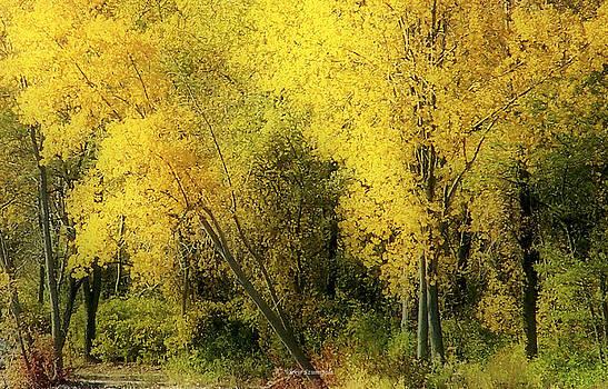 Fall by Vickie Szumigala
