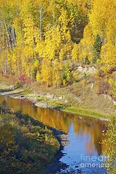 Alanna DPhoto - Golden Fall Fort McMurray