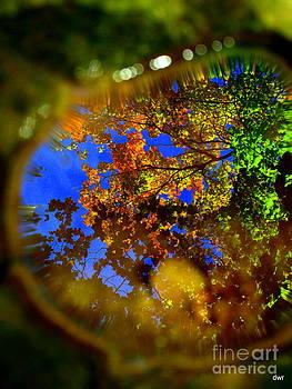 Fall  Water Reflections by Denny Ragan