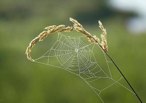 Fall Web by Annie Pflueger