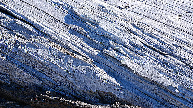 Connie Fox - Fallen Evergreen Abstract - Mount St. Helens Inner Blast Zone