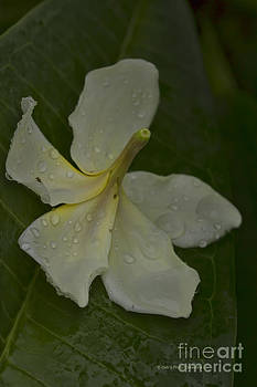 Deborah Benoit - Fallen From The Rain