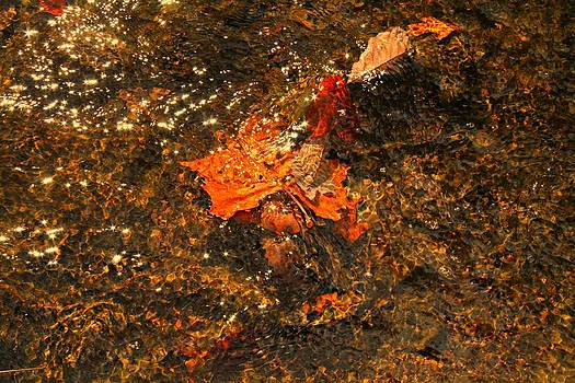 Fallen Leaf Creek by Candice Trimble
