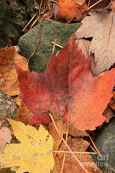 Fallen Leaves by Kathy DesJardins