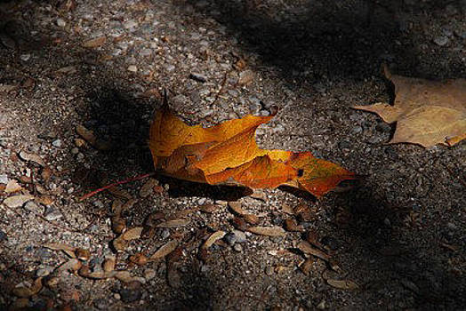 Fallen Leaves by Vonnie Murfin
