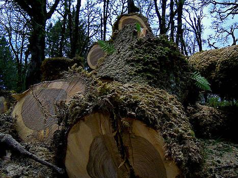 Fallen Oak by Steve Battle