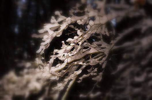 Fallen Snow by Heather L Wright