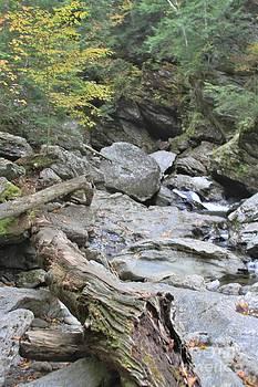 Butch Phillips - Fallen Timber