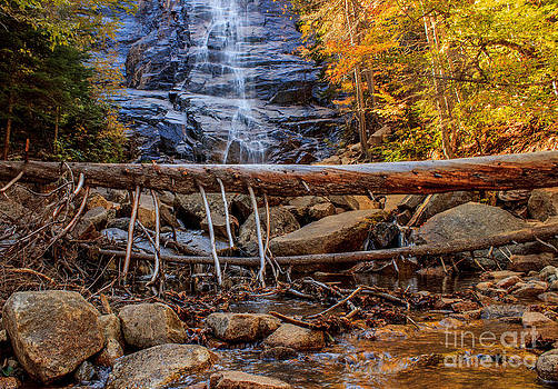 Fallen Tree at Arethusa Falls by Patrick Lombard