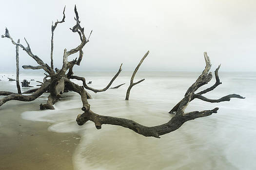 Fallen Tree on Beach by Derek Latta