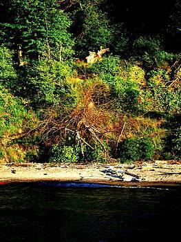 Fallen Tree on the Shore by Mark Malitz