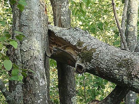 Fallen Trees by KimberAnne