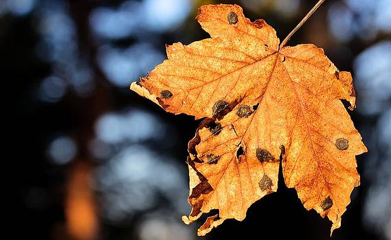 Falling Leaf by Martin Hristov