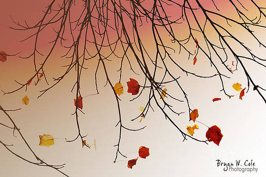 Falling Leaves by Bryan Cole Photography