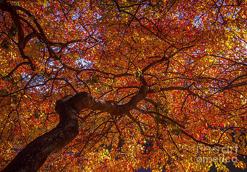Fall's Stained Glass by Kim Kruger