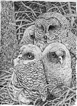 Family of Owls by Jason Morgan