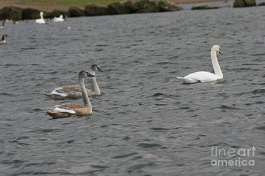 Family Outing by Carol Lynch