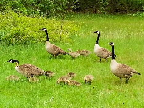 Family Outing  by Heather Sylvia