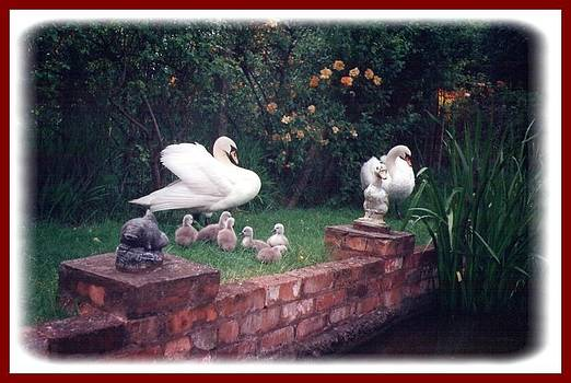 Family Swan by Geoff Cooper