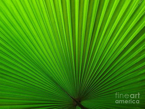 Fan Palm by Ranjini Kandasamy