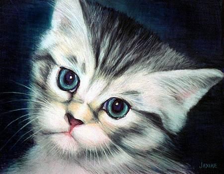 Fancy Face Kitten by JAXINE Cummins