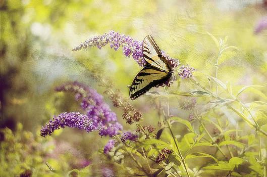 Fantasy Garden Series II by Kathy Jennings