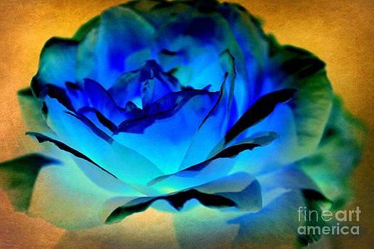 Fantasy Rose by Judy Palkimas