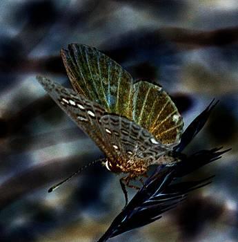 Fantasy Wings by Renee Oglesbee