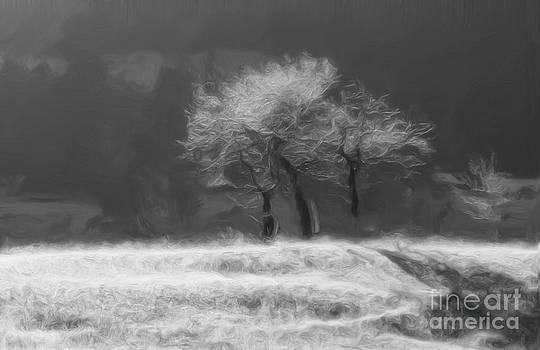 Roland Stanke - Phantom trees