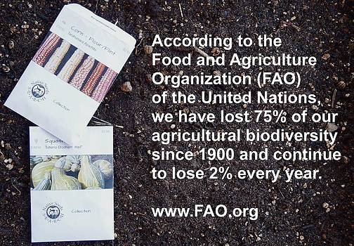 FAO Report by Jon Simmons
