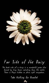 Weston Westmoreland - far side of the daisy fractal version