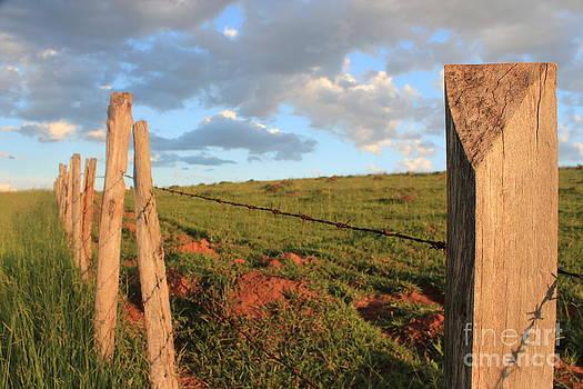 Farm by Felipe Magalhaes