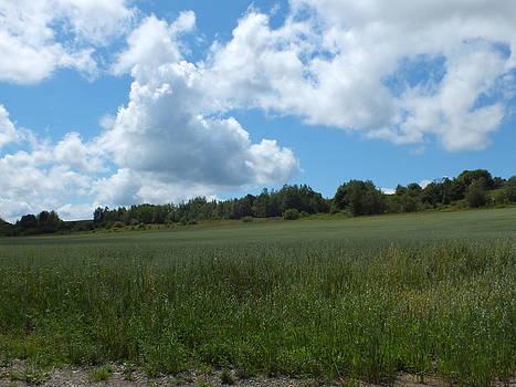 Gene Cyr - Farm Field 1