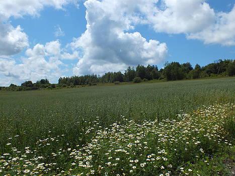 Gene Cyr - Farm Field 2