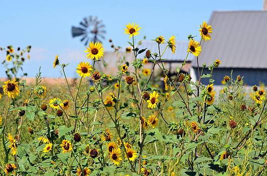 Farm Flowers by Clarice  Lakota