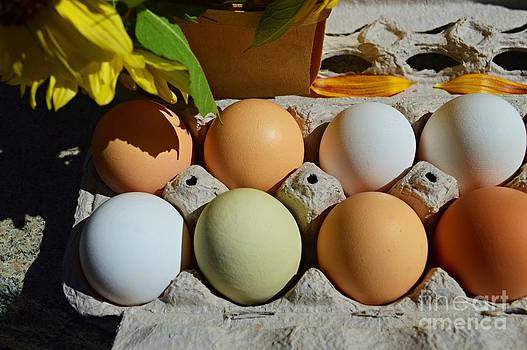 Farm Fresh Eggs by Sharon L Stacy