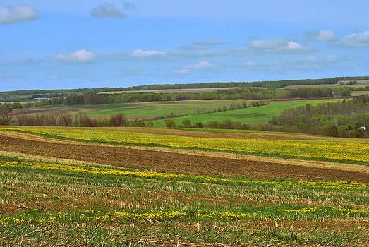 Farm Patterns by Judy Salcedo