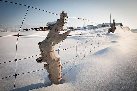 Farm yard by Stephanus Le Roux