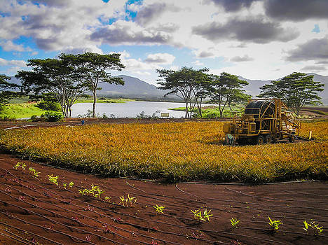 Farming in Hawaii by Richard Brown