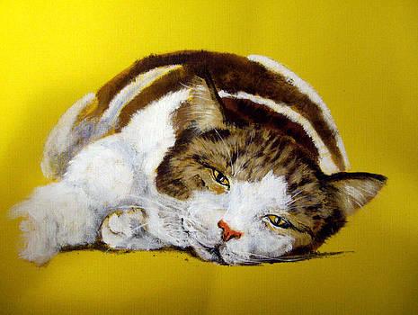 Fat Tabby Cat  by Barbara Lightner