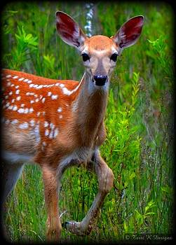 Fawn Friend by Terri K Designs