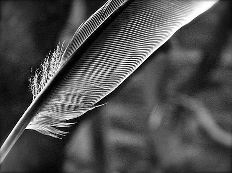 Sandy Tolman - Feather Angle One