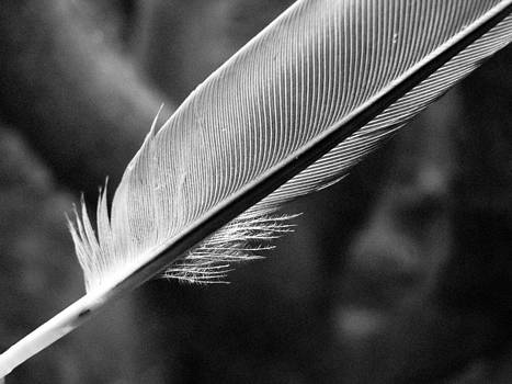 Sandy Tolman - Feather Angle Two