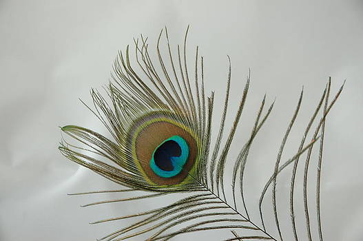 Feather by David Armstrong