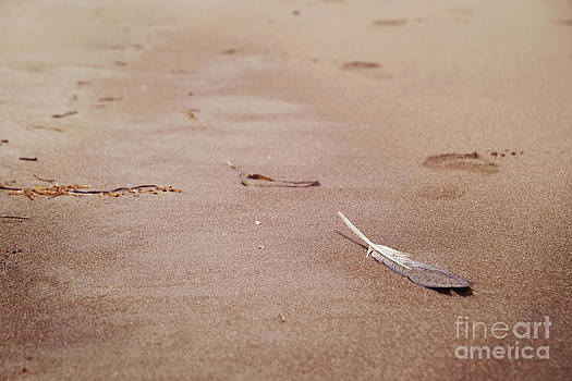 Feather on sand by Cindy Garber Iverson