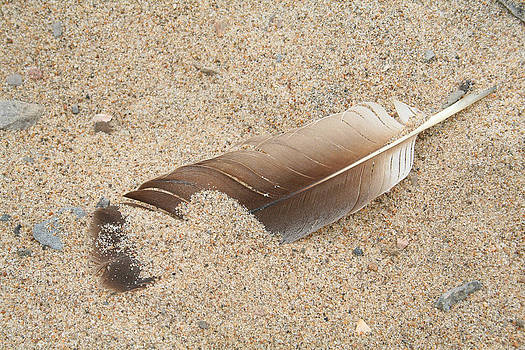 Feather on the Beach by Bob and Jan Shriner