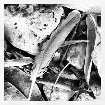 #feather #rocks #blackandwhite by Greta Olivas