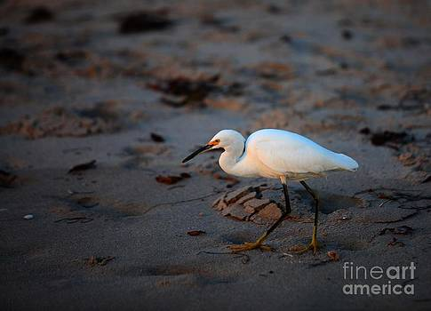 Feathered Beachcomber by Jennifer Lawrence